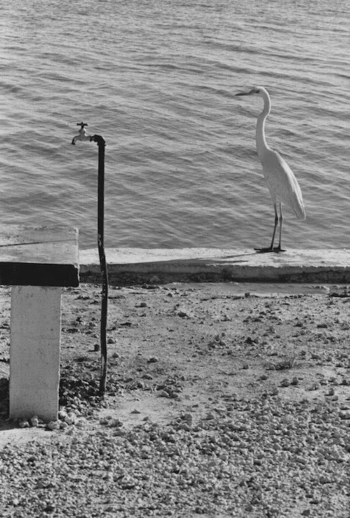 Elliott Erwitt – Florida Keys, USA, 1968